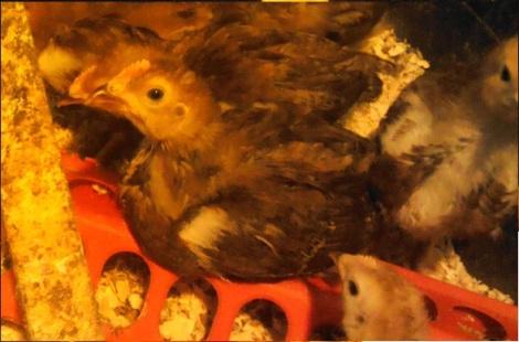 Petey Bird... who isn't nearly as cute anymore