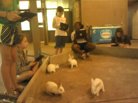 Bunnies in an enclosure being photographed and petted.