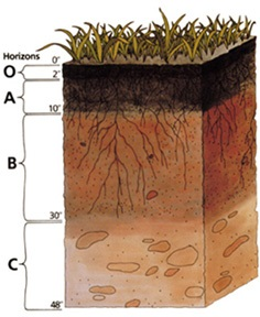 Most soil profiles have many different layers