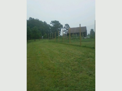These are the flagged plots looking up to the barn.