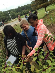 Identifying and Developing Native Plants