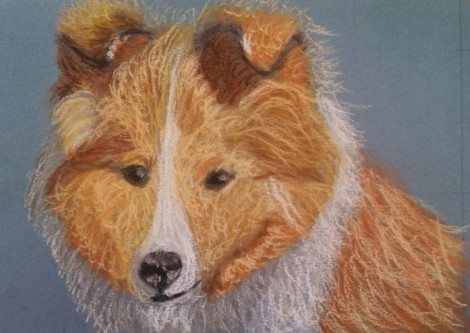 This is a custom Sheltie that I did for a friend.