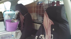 Backseat is crammed full as well... I really need a bigger car!
